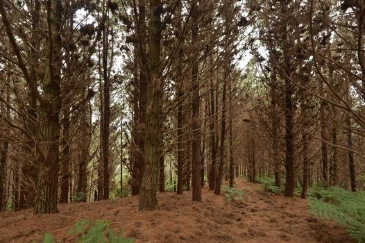645 Mt Tiger Road Parua Bay property image