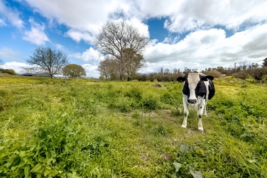 Lot 2/8C Forkert Road Ohaupoproperty carousel image