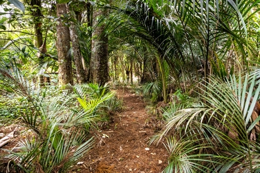 3 Opanuku Road Henderson Valleyproperty carousel image