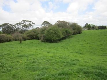 21 Grayden Road Morrinsville property image