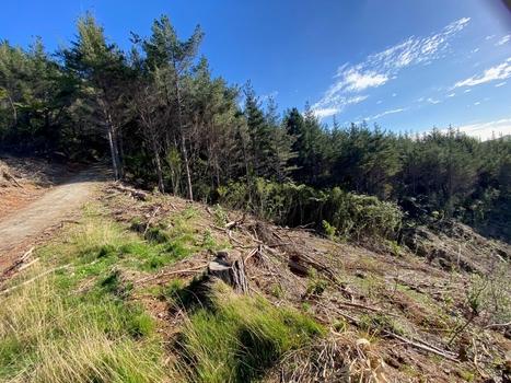 364 Fern Flat Road Peria property image