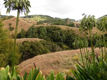 447C Waingaro Road Ngaruawahiaproperty carousel image