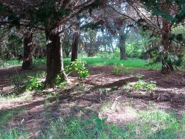1173 Kohumaru Road Mangonui property image