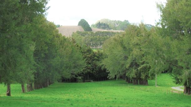 243 Landlyst Road Waihi property image