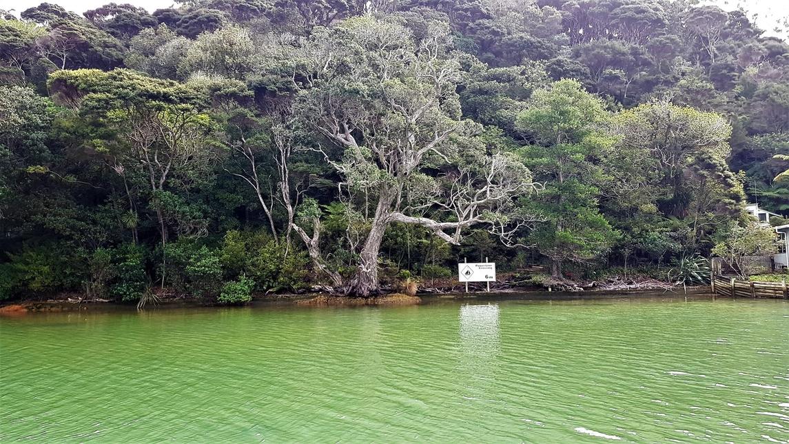 Lot 138 Starboard Arm Kawau Island featured property image