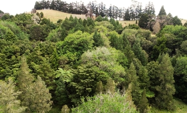 0 Diggers Valley Road Kaitaia property image
