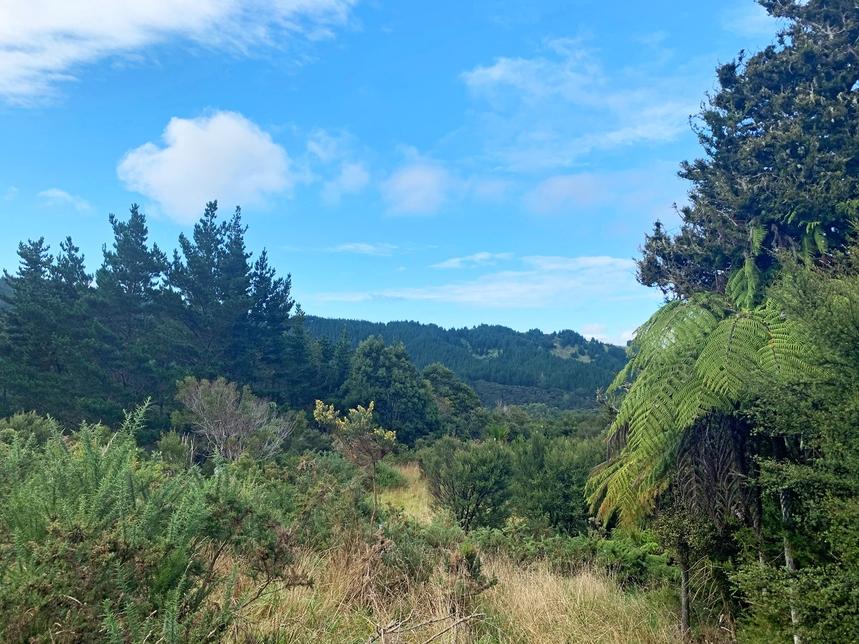 20 Kaponga Lane Warkworth featured property image